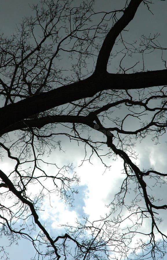 Zweige Im Himmel Stockfotografie