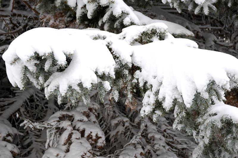 Zweige mit Eis stockfotografie