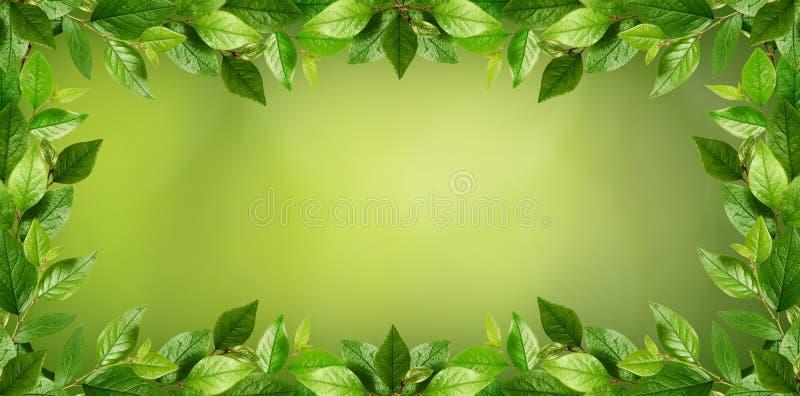 Zweige mit frischen grünen Blättern in einem Rahmen stock abbildung