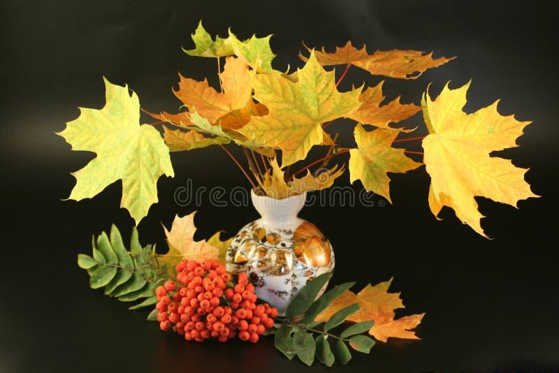 Zweige mit mehrfarbigem stockfoto