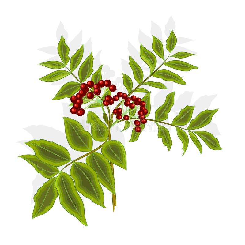 Zweigebereschenbeere mit Blatt- und Beerenvektor lizenzfreie abbildung