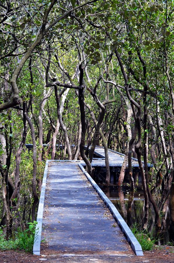 Zweihundertjähriger Park, Sydney, Australien lizenzfreies stockfoto
