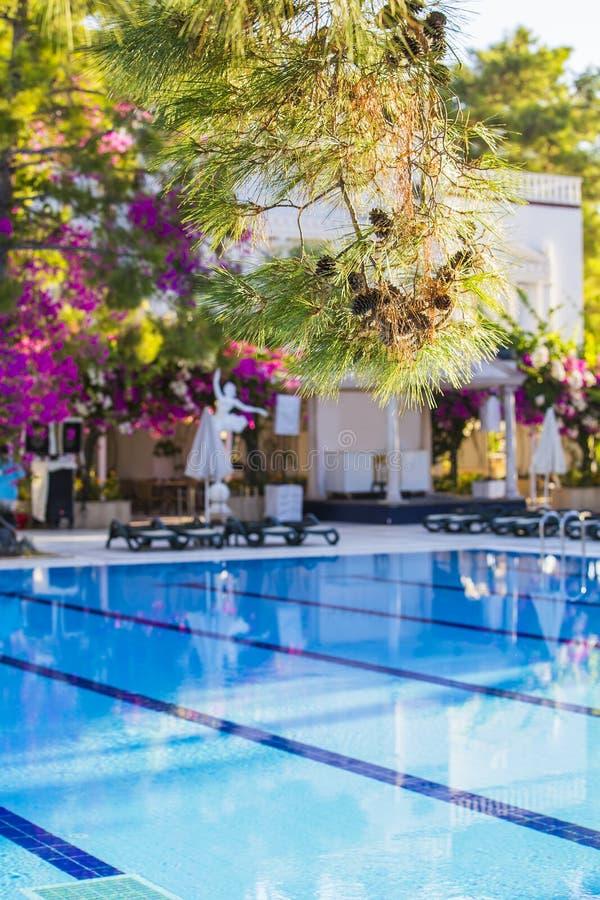 Zwembad bij hotel met bar Leeg hotel, palmen, paraplu's royalty-vrije stock afbeeldingen
