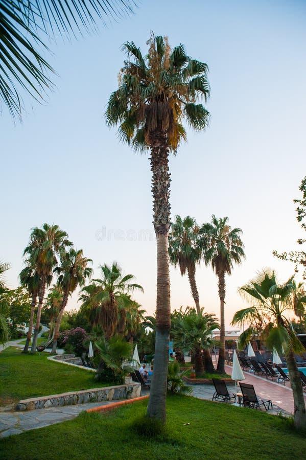 Zwembad met palmen en paraplu's stock foto's