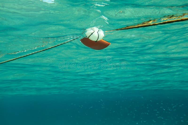 zwemmend naar kabel met rode overzeese boei, ondiepte van kleine vissen royalty-vrije stock afbeelding