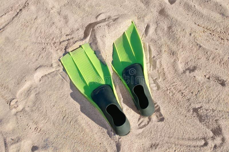 Zwemmende vinnen op een strand royalty-vrije stock fotografie