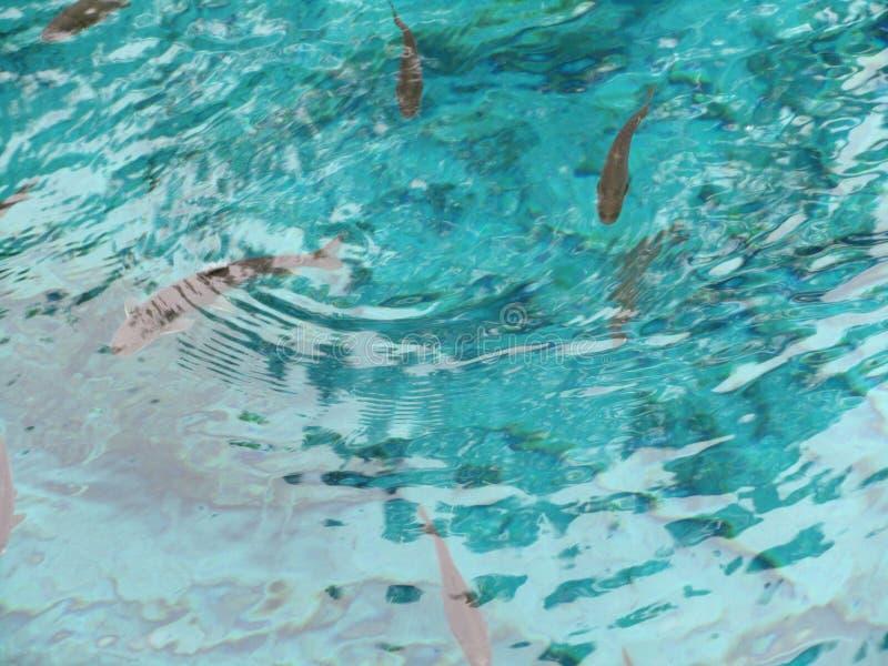 Zwemmende vissen in water-wereld Natuurlijk erfgoed royalty-vrije stock afbeeldingen