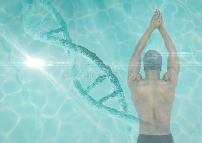 Zwemmer met een de ketting en de poolsuperposition van DNA vector illustratie
