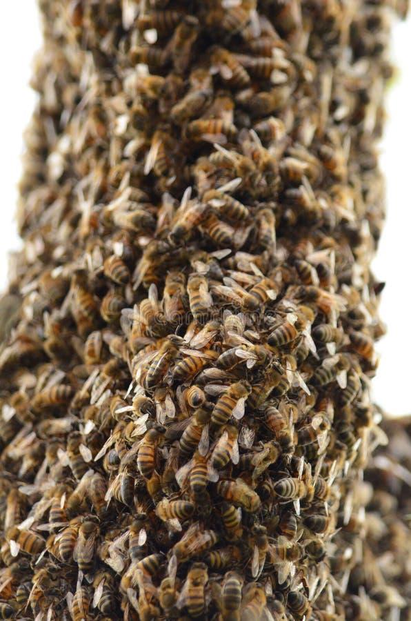 Zwerm van bijen royalty-vrije stock foto