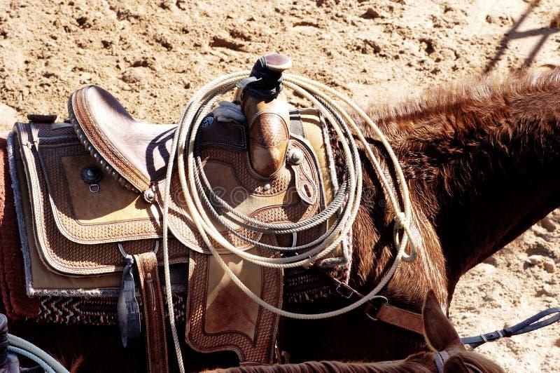 związanie koń. zdjęcia stock