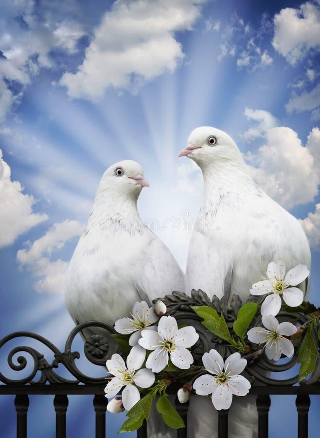 zwiastun serdecznie miłość zdjęcie royalty free