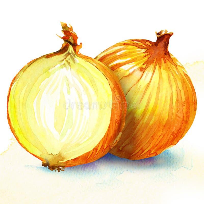 Zwiebel. Aquarellmalerei auf weißem Hintergrund lizenzfreie abbildung