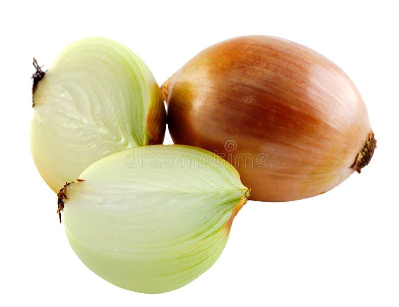 Zwiebel auf weißem Hintergrund lizenzfreie stockfotos