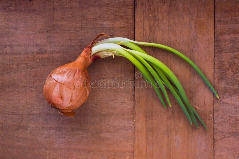 Zwiebel mit den Grüns stockfotos