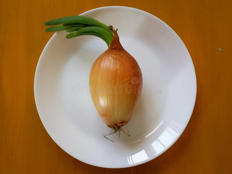 Zwiebel mit neuem Grün verlässt auf weißer Platte lizenzfreie stockbilder