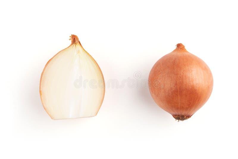Zwiebelbirne lokalisiert Zwiebelscheibe auf weißem Hintergrund stockfotos
