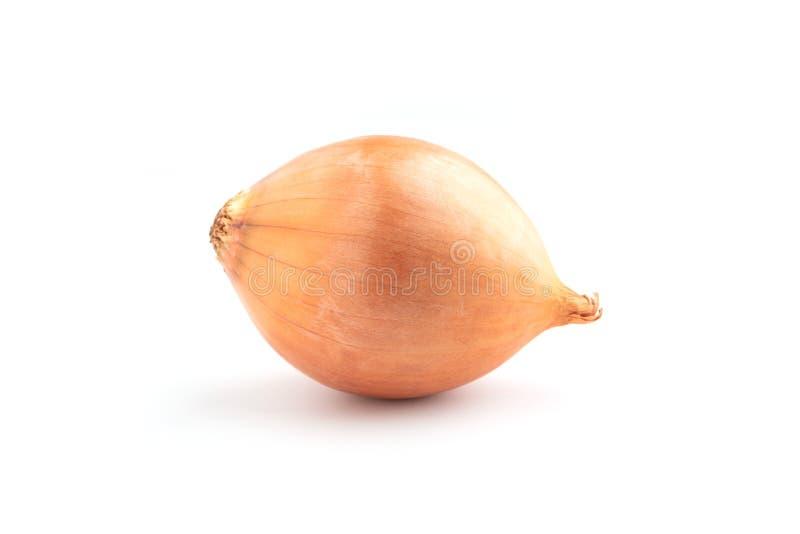 Zwiebeln lokalisiert auf weißem Hintergrund lizenzfreies stockbild