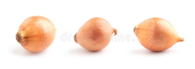Zwiebeln lokalisiert auf weißem Hintergrund stockfoto