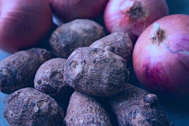 Zwiebeln und Colocasia stockfotografie