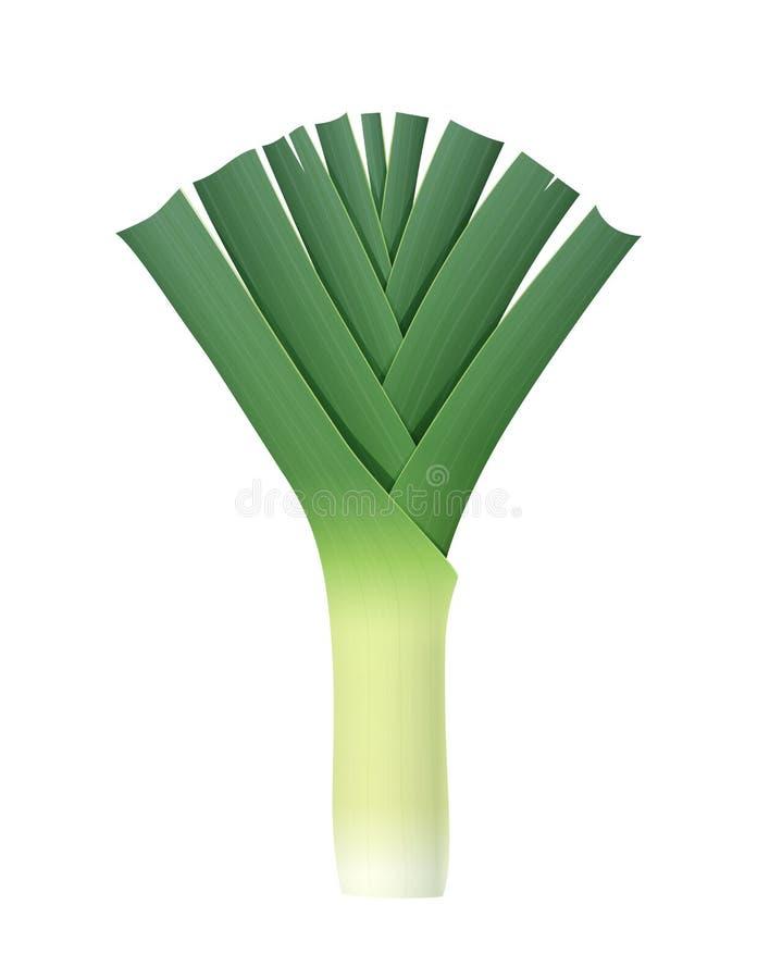 Zwiebelporree Reifes grünes Gemüse Auch im corel abgehobenen Betrag stock abbildung