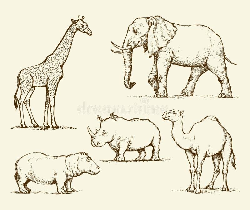 zwierząt afrykańskich rysuje tła trawy kwiecistego wektora ilustracji