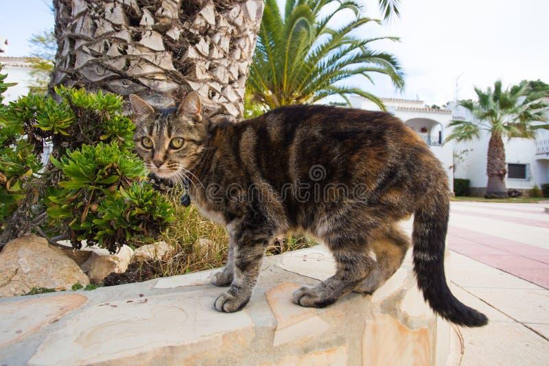 Zwierząt domowych i zwierze domowy pojęcie - Śliczny kot jest ubranym kołnierza odprowadzenie na ulicie zdjęcia stock