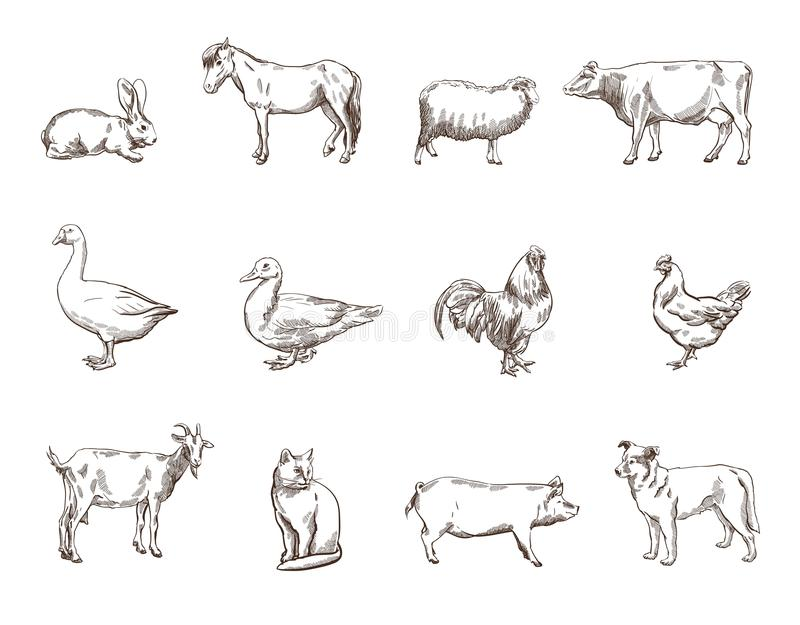 zwierząt gospodarstwa rolnego krajobraz wiele sheeeps lato ilustracja wektor