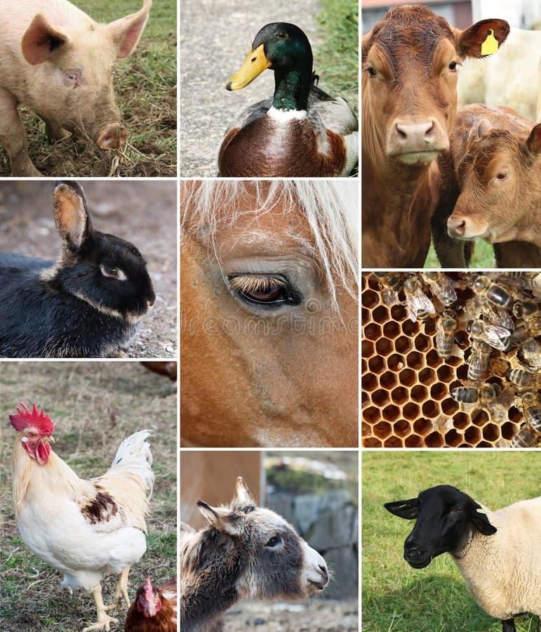zwierząt kolażu gospodarstwo rolne zdjęcie stock