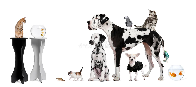 zwierząt tła frontowej grupy biel zdjęcie stock