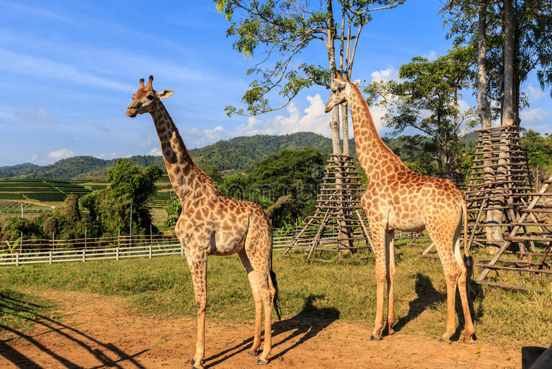 zwierzę obrazy royalty free