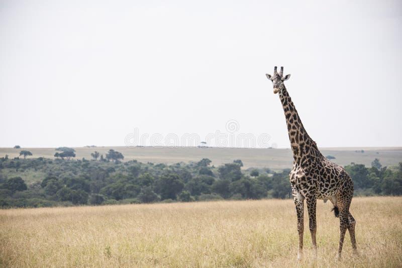 zwierzę zdjęcia royalty free