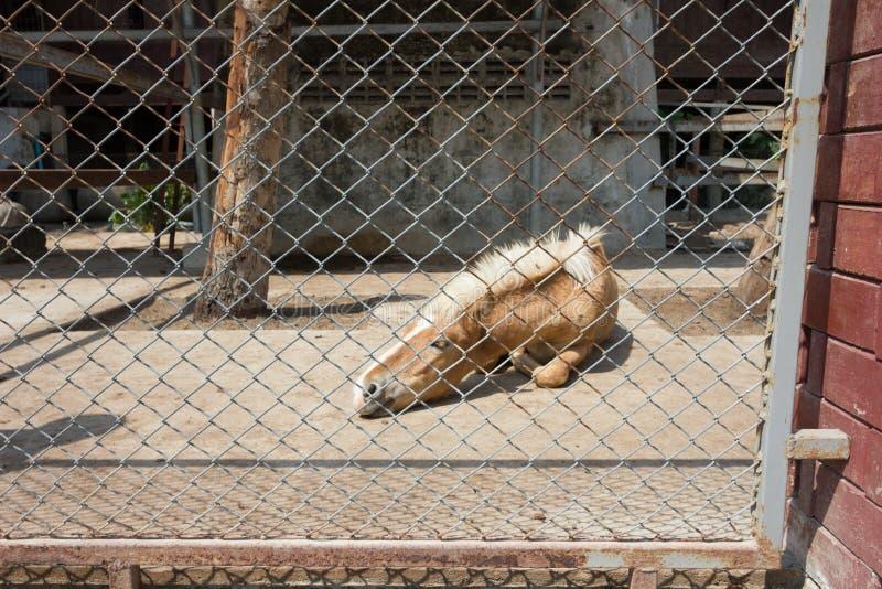 Zwierzę, choroba, gospodarstwo rolne zdjęcie stock