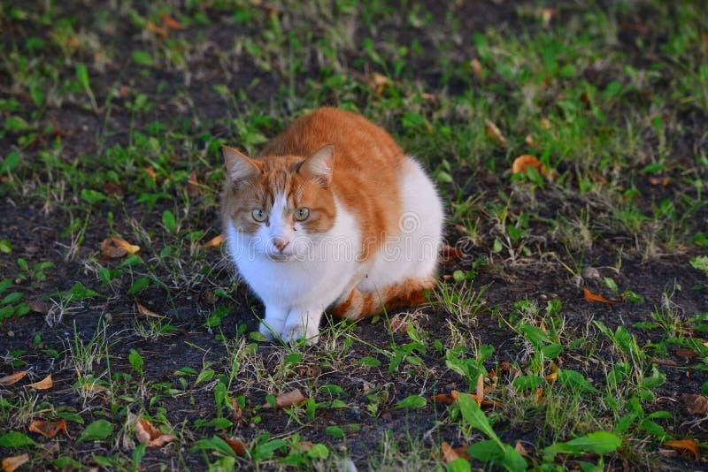 Zwierzę domowe kota obsiadanie w trawie obrazy royalty free