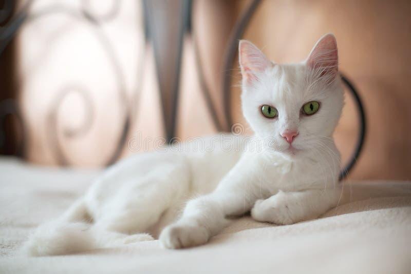 Zwierzę domowe kotuś, kot na łóżku obraz stock