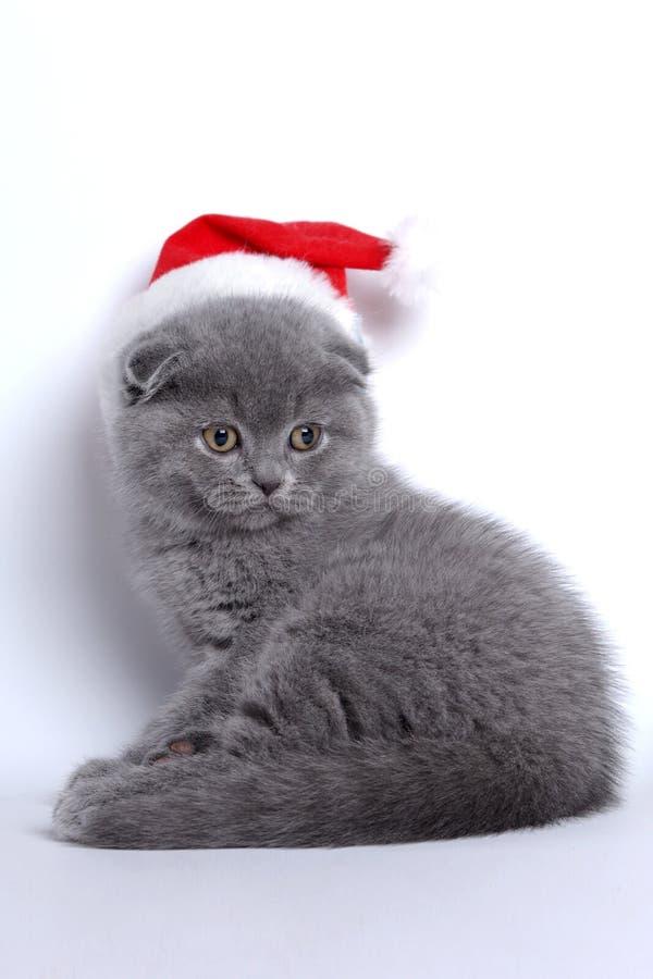 zwierzę domowe nowy rok zdjęcia stock