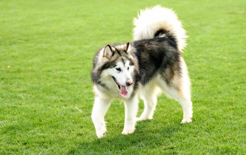 Zwierzę domowe pies zdjęcie royalty free