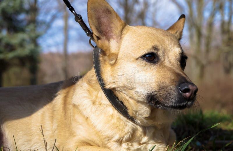 Zwierzę domowe pies dla spaceru w parku zdjęcia royalty free