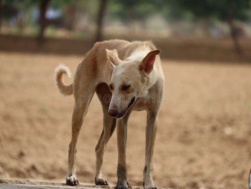 zwierzę domowe pies   myśliciela psi wizerunek obraz royalty free