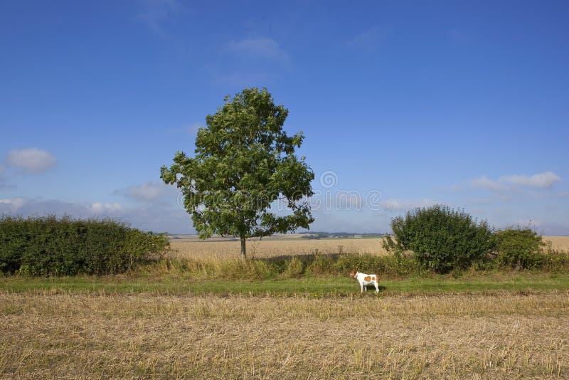 Zwierzę domowe psa i potomstwo popiółu drzewo fotografia royalty free