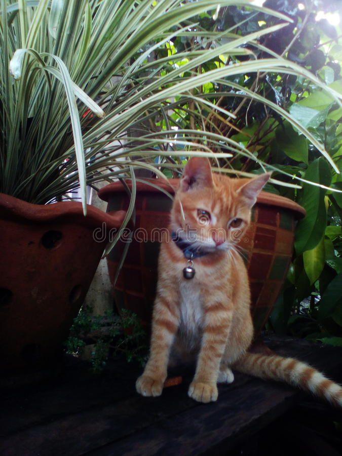 Zwierzę, kot fotografia stock