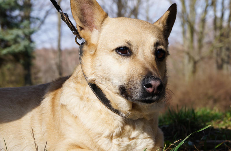 zwierzę pies dla spaceru w parku obrazy stock