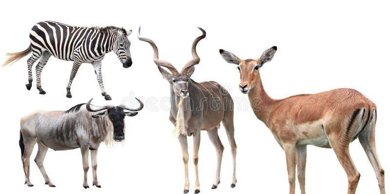 Zwierzę set obraz royalty free
