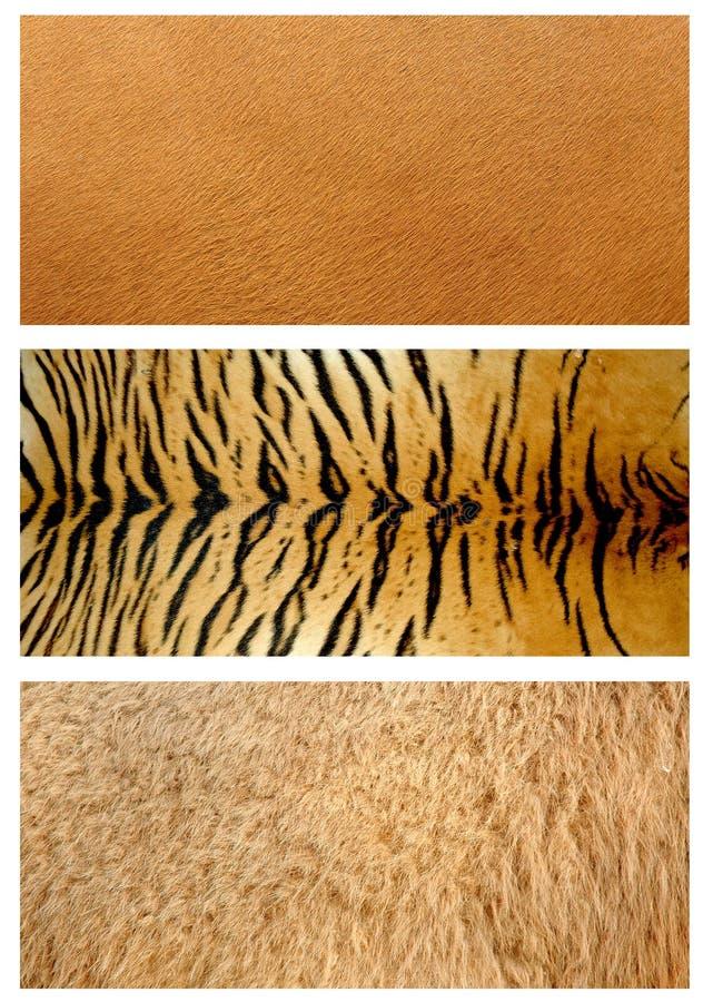 zwierzę skóra obrazy royalty free
