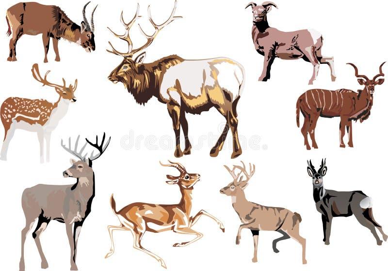 zwierzę uzbrajać w rogi dziewięć ilustracji
