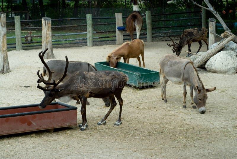 zwierzę w zoo zdjęcia stock