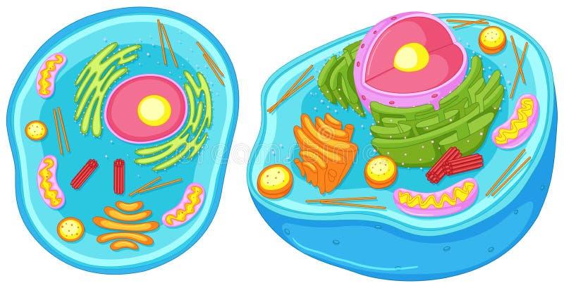 Zwierzęca komórka w zamkniętym spojrzeniu ilustracja wektor