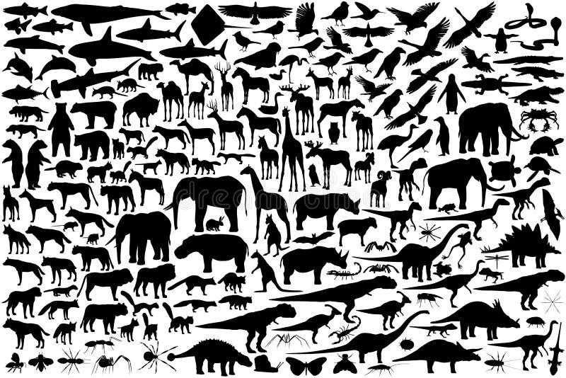 zwierzęce sylwetki ilustracji