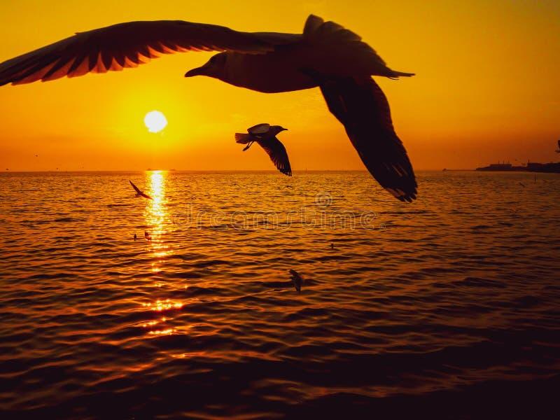 Zwierzęcej natury seascape dennego wybrzeża natury oceanu horyzontu sylwetki ptaka skrzydła nieba wschód słońca zmierzchu światła fotografia royalty free
