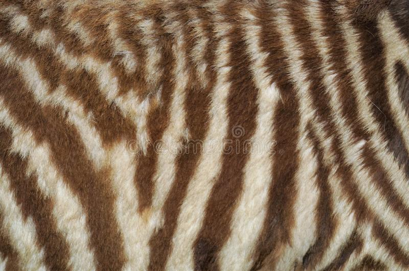 Zwierzęcej skóry tekstura zdjęcia stock
