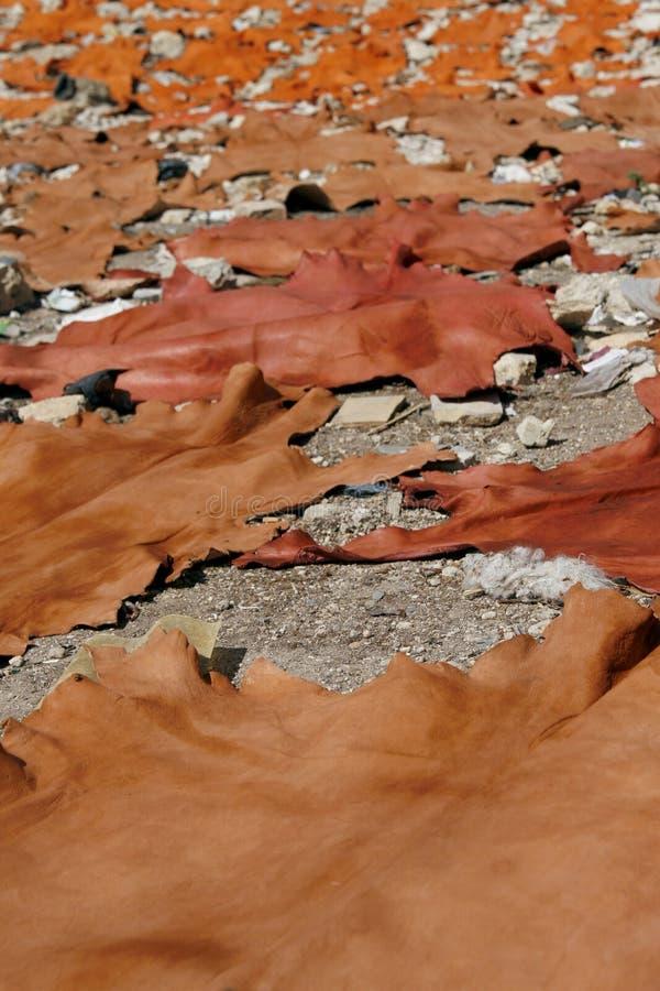zwierzęcia barwiony osuszki świeżo surowy skór słońce zdjęcia royalty free